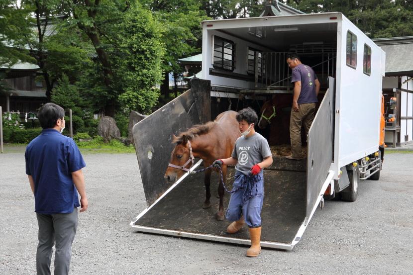 木曽馬搬入の様子