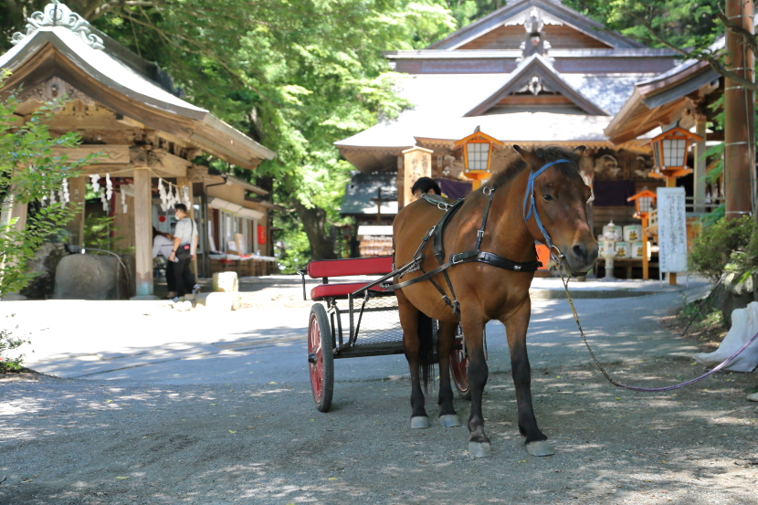 新倉山浅間公園:馬車